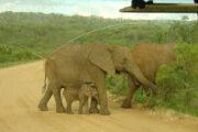 Im Addo Elefant NP