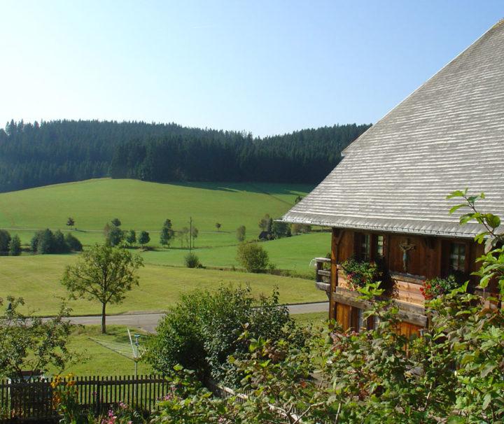 Schwarzwald pur